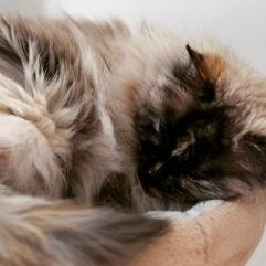 Kissoista voi ottaa mallia, jos vanne puristaa päätä.