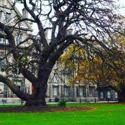 Trinityn kampusaluetta.